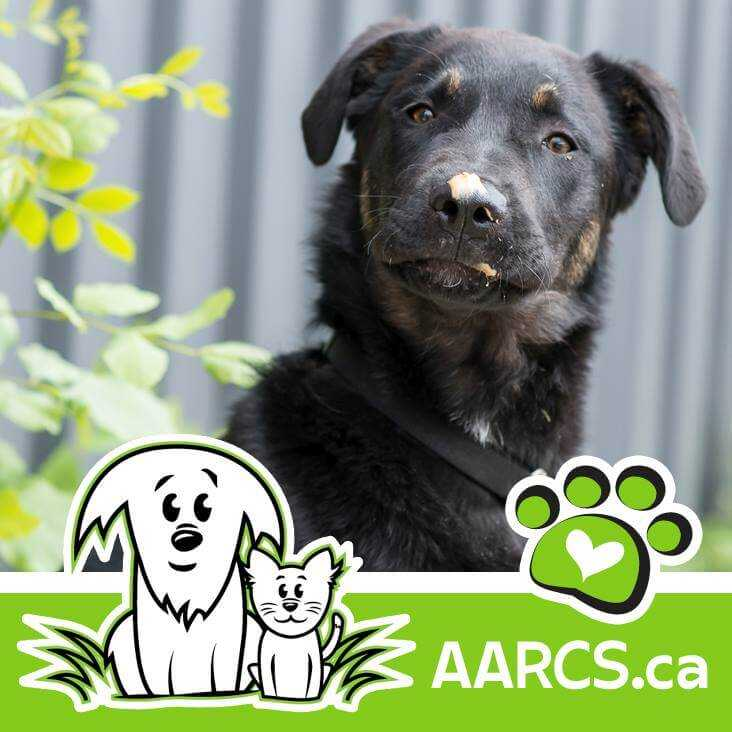AARCS Logo and Dog